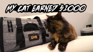 Promo That Earned My Cat $1000...Review of TOURIT Pet Carrier - Airport Approved Cat / Dog Bag